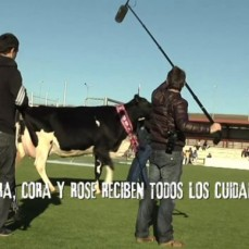 Vacas Osasuna – Making of